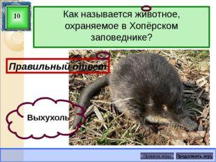 У хищников зрачок имеет щелевидную форму. И вот что интересно: у кошек он рас