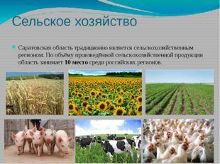 Сельское хозяйство Саратовская область традиционно является сельскохозяйствен