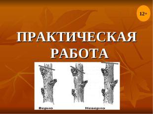 ПРАКТИЧЕСКАЯ РАБОТА 12+