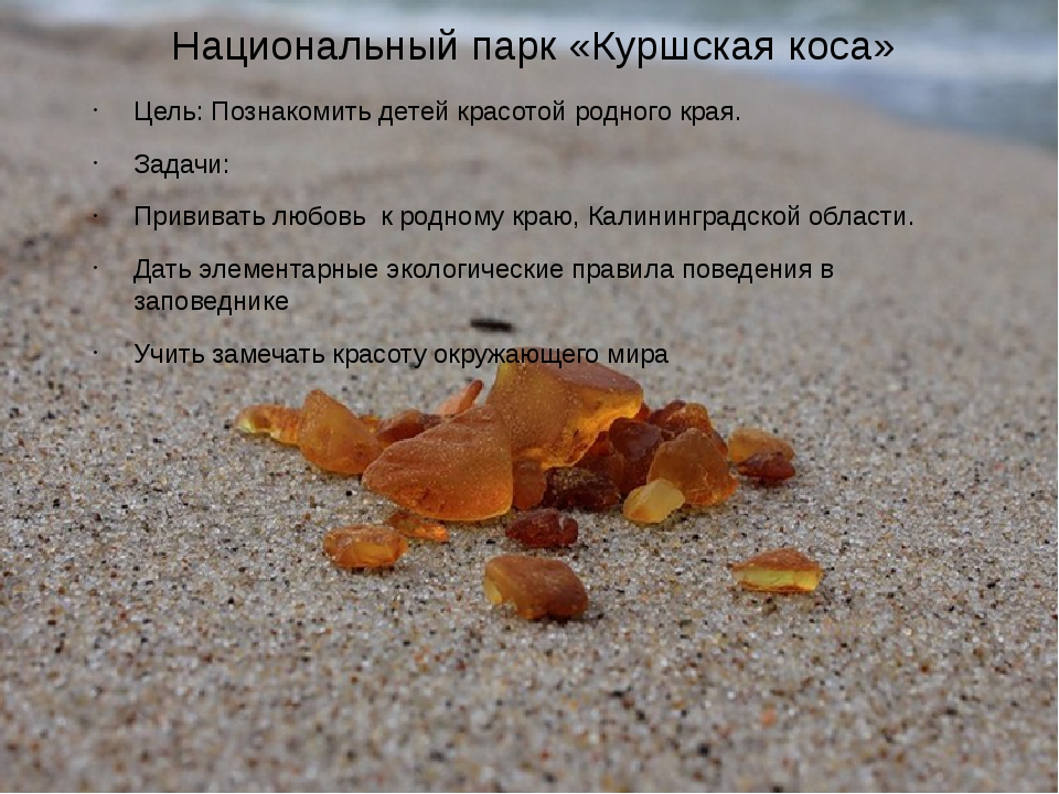 Национальный парк «Куршская коса» Цель: Познакомить детей красотой родного кр...