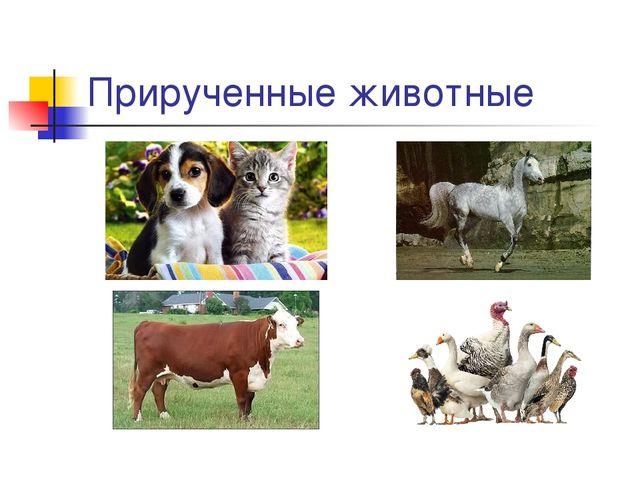 Прирученные животные