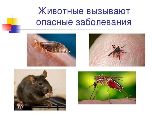 Животные вызывают опасные заболевания
