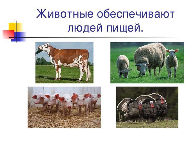 Животные обеспечивают людей пищей.