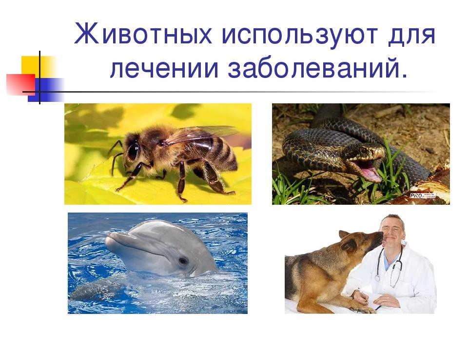 Животных используют для лечении заболеваний.
