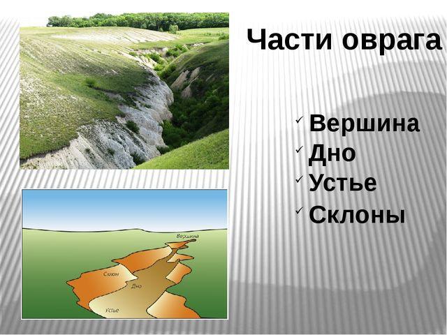 Части оврага Вершина Дно Устье Склоны