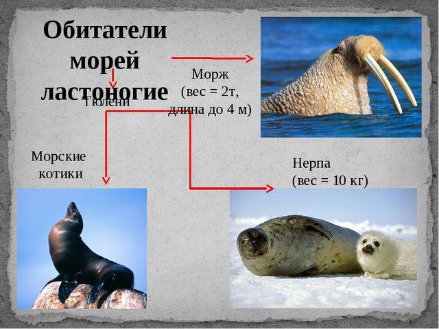 Морж (вес = 2т, длина до 4 м) Нерпа (вес = 10 кг) Тюлени Морские котики Обита...
