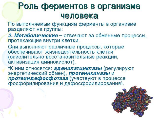 Роль ферментов в организме человека По выполняемым функциям ферменты в органи...