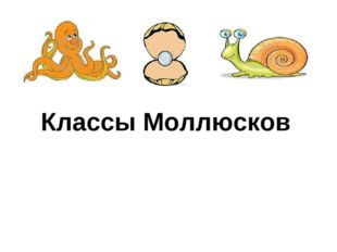 Классы Моллюсков