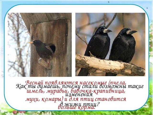 Как ты думаешь, почему стали возможны такие изменения в жизни птиц? Весной...