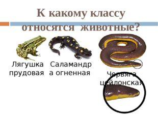 К какому классу относятся животные? Лягушка прудовая Саламандра огненная Черв