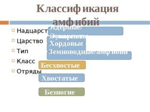 Классификация амфибий Надцарство Царство Тип Класс Отряды Животные Ядерные/ Э