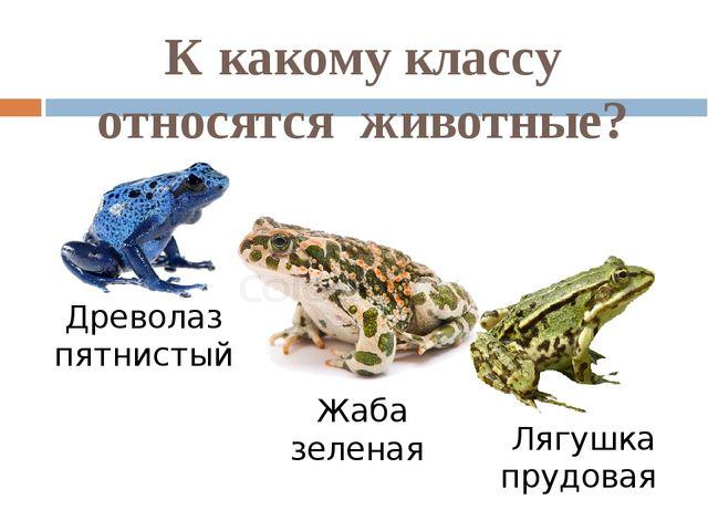 К какому классу относятся животные? Древолаз пятнистый Жаба зеленая Лягушка п...