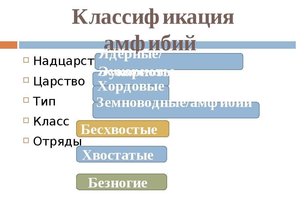 Классификация амфибий Надцарство Царство Тип Класс Отряды Животные Ядерные/ Э...