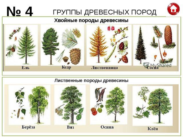 ГРУППЫ ДРЕВЕСНЫХ ПОРОД № 4 Хвойные породы древесины Лиственные породы древесины