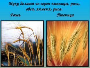 Рожь Пшеница Муку делают из зерен пшеницы, ржи, овса, ячменя, риса.