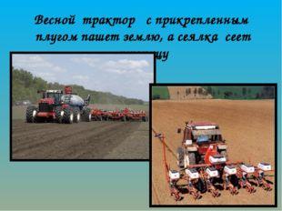 Весной трактор с прикрепленным плугом пашет землю, а сеялка сеет пшеницу
