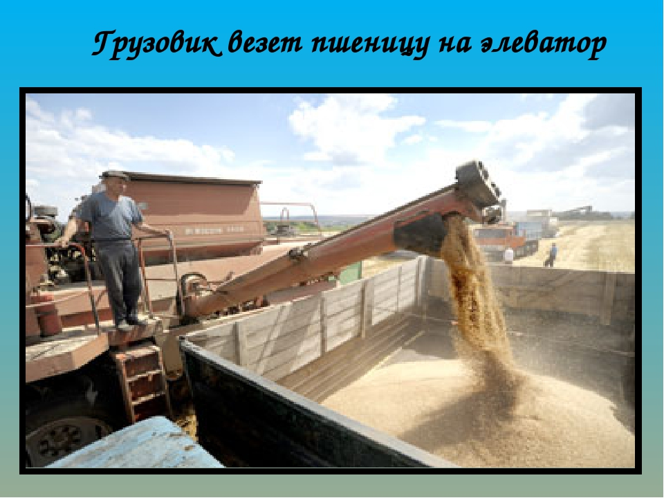 Грузовик везет пшеницу на элеватор