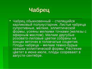 Чабрец Чабрец обыкновенный – стелящийся карликовый полукустарник. Листья чаб