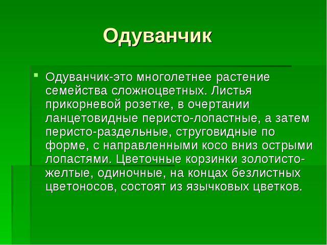 Одуванчик Одуванчик-это многолетнее растение семейства сложноцветных. Листья...