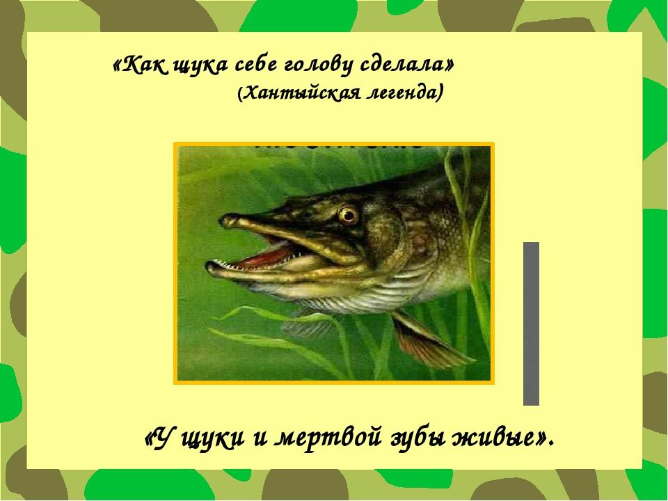 «Как щука себе голову сделала» (Хантыйская легенда) «У щуки и мертвой зубы жи...