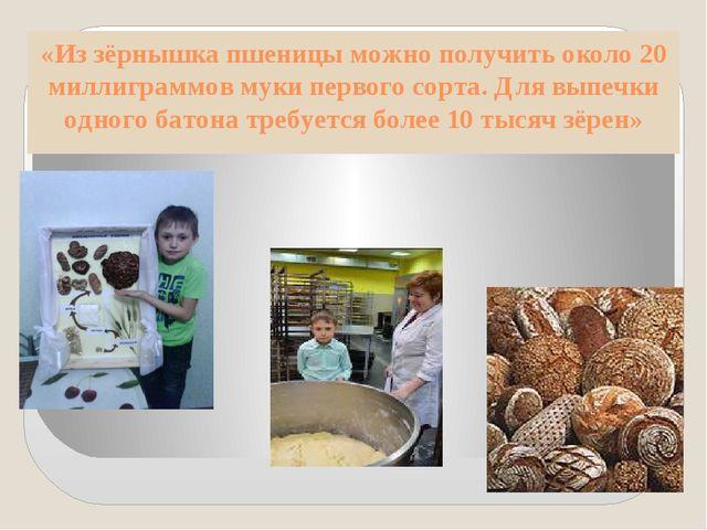 «Из зёрнышка пшеницы можно получить около 20 миллиграммов муки первого сорта....
