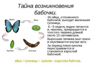 Тайна возникновения бабочки. Из яйца, отложенного бабочкой, выходит маленькая