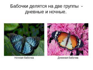 Бабочки делятся на две группы - дневные и ночные. Ночная бабочка Дневная бабо