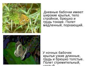 Дневные бабочки имеют широкие крылья, тело стройное, брюшко и грудь тонкие.