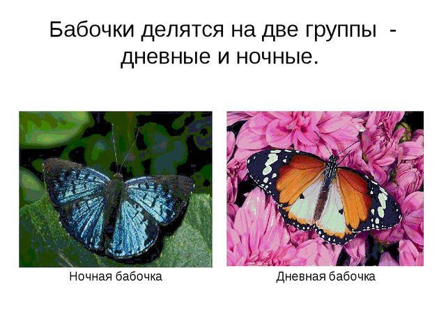Бабочки делятся на две группы - дневные и ночные. Ночная бабочка Дневная бабо...