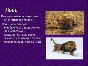 Львы Лев –это хищное животное. Оно питается мясом. Лев - царь зверей. Необыч