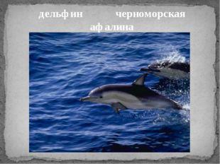 дельфин черноморская афалина
