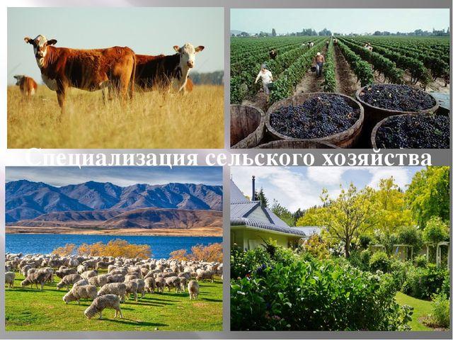 Специализация сельского хозяйства