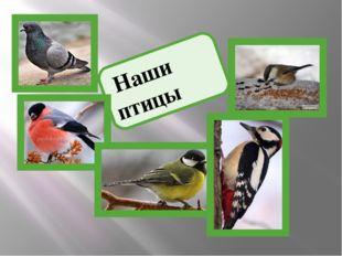 Наши птицы