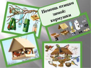 Помощь птицам зимой: кормушки