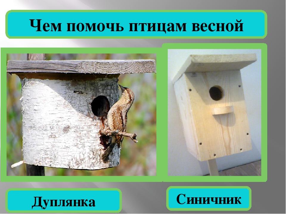 Чем помочь птицам весной Дуплянка Синичник