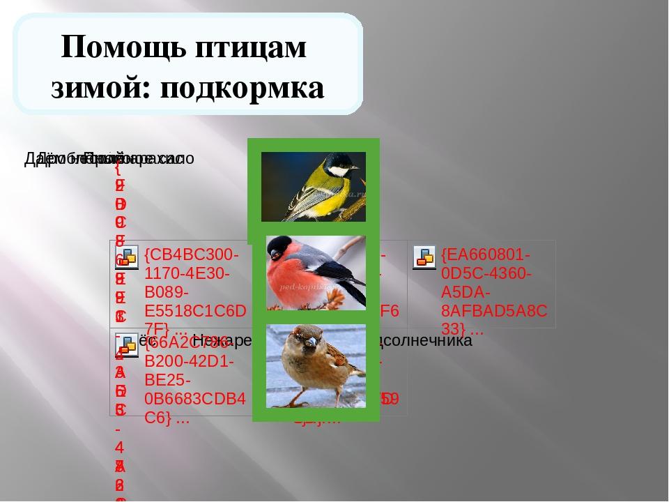 Помощь птицам зимой: подкормка