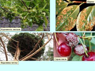 3 Карантинные и особо опасные болезни и вредители сельскохозяйственных растен