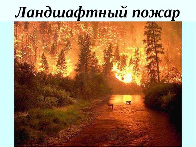 Ландшафтный пожар
