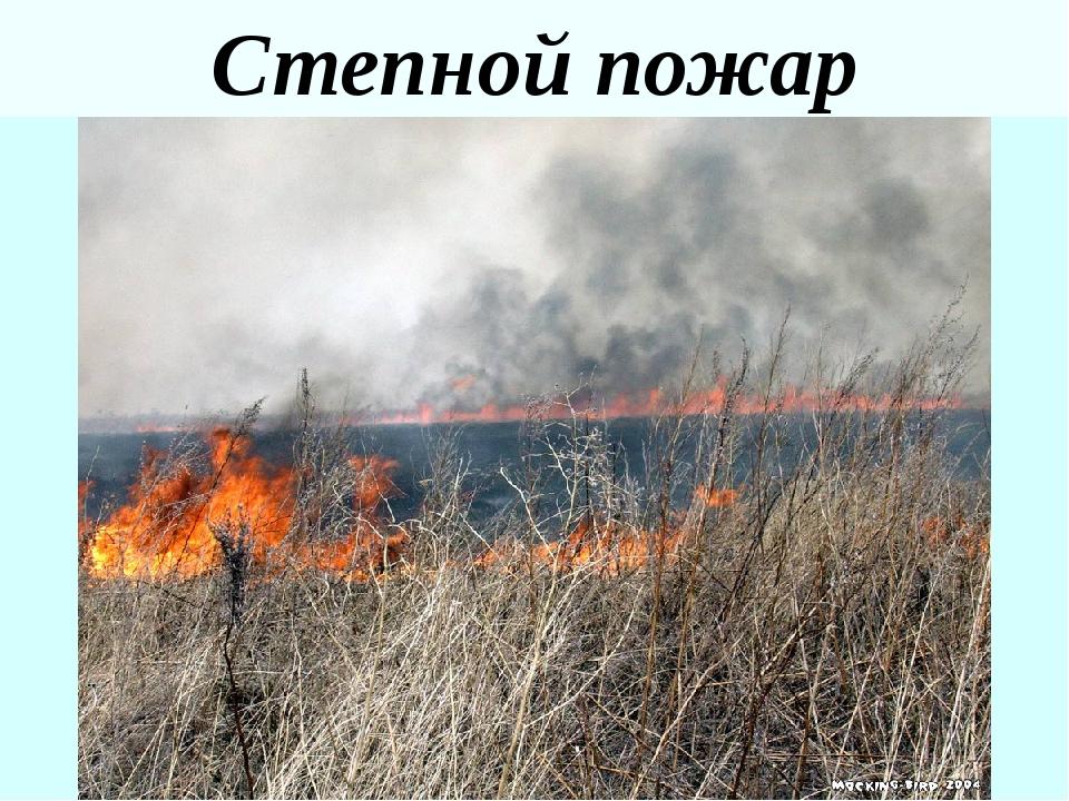 Тундровый пожар