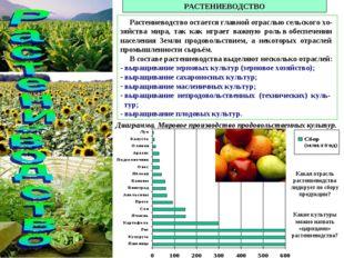 РАСТЕНИЕВОДСТВО Растениеводство остается главной отраслью сельского хо-зяйств