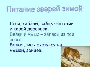 Волки, лисы охотятся на мышей, зайцев Лоси, кабаны, зайцы- ветками и корой де