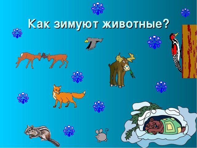 Как зимуют животные?