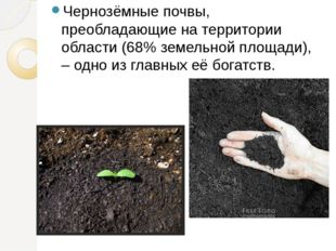Чернозёмные почвы, преобладающие на территории области (68% земельной площади