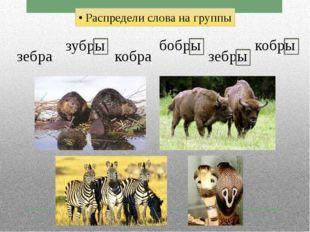 • Распредели слова на группы зебра зубры кобра бобры зебры кобры