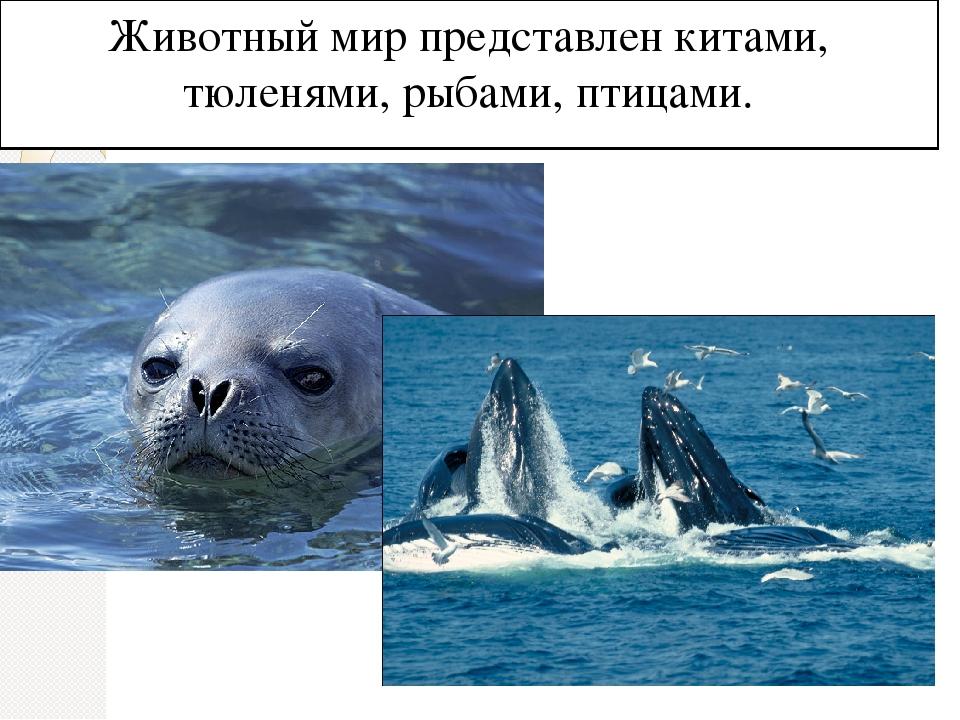 Животный мир представлен китами, тюленями, рыбами, птицами.