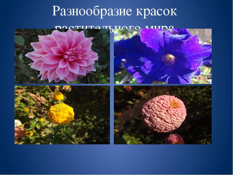 Разнообразие красок растительного мира