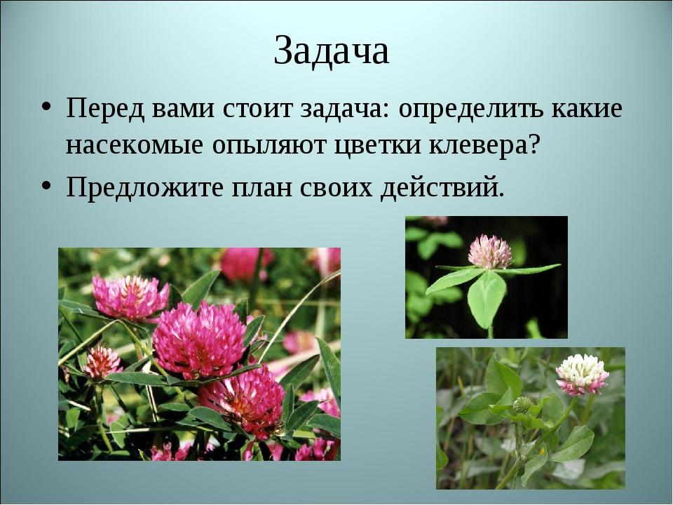 Задача Перед вами стоит задача: определить какие насекомые опыляют цветки кле...