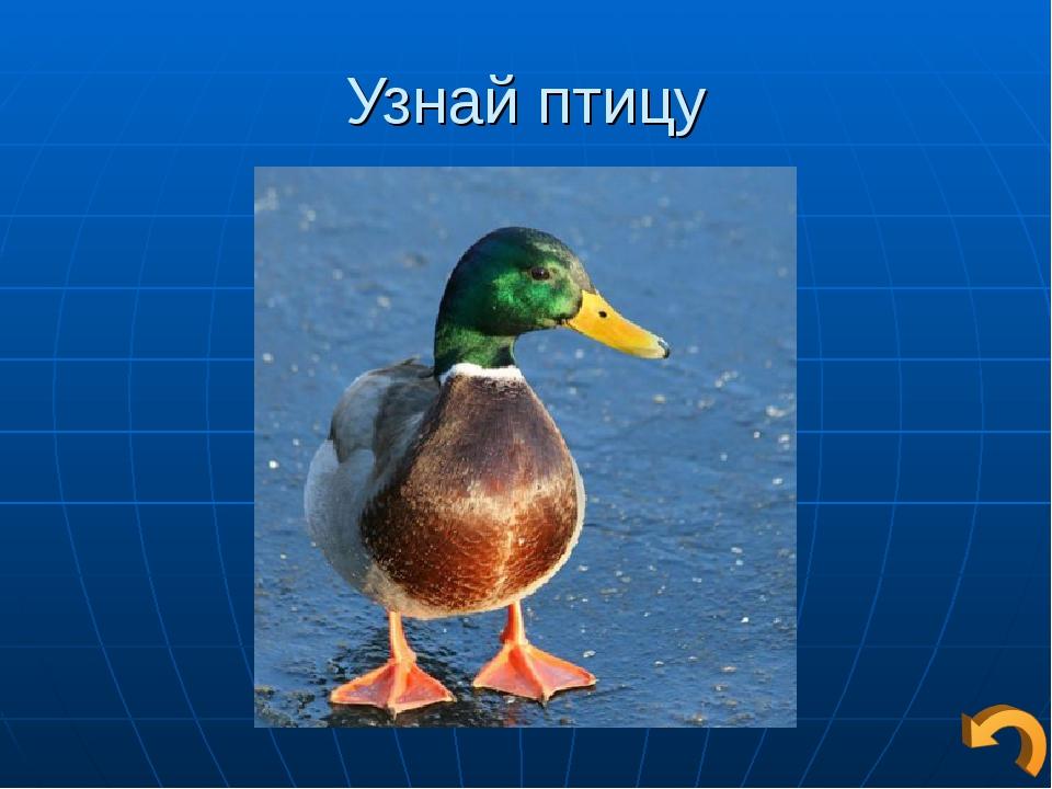 Узнай птицу