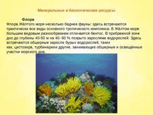 Минеральные и биологические ресурсы Флора Флора Жёлтого моря несколько бедн