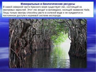 Минеральные и биологические ресурсы В самой северной части Красного моря суще